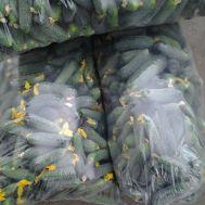 Мешки полиэтиленовые для огурца